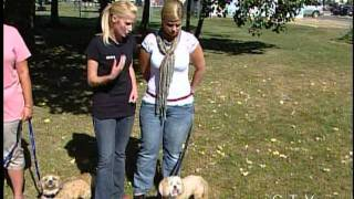 Dog Training Tips From The Pros - Ctv Edmonton (september 7, 2011)