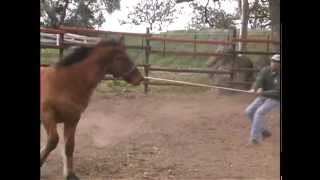 Horse Bloopers