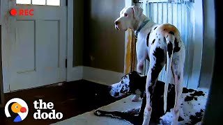Dog Caught On Hidden Camera Doing The Sweetest Thing For Foster Brother | The Dodo Foster Diaries