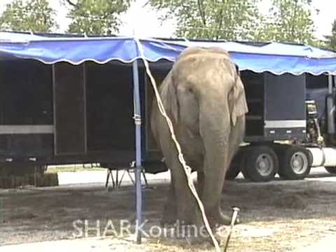 Cruelty to Circus Elephants