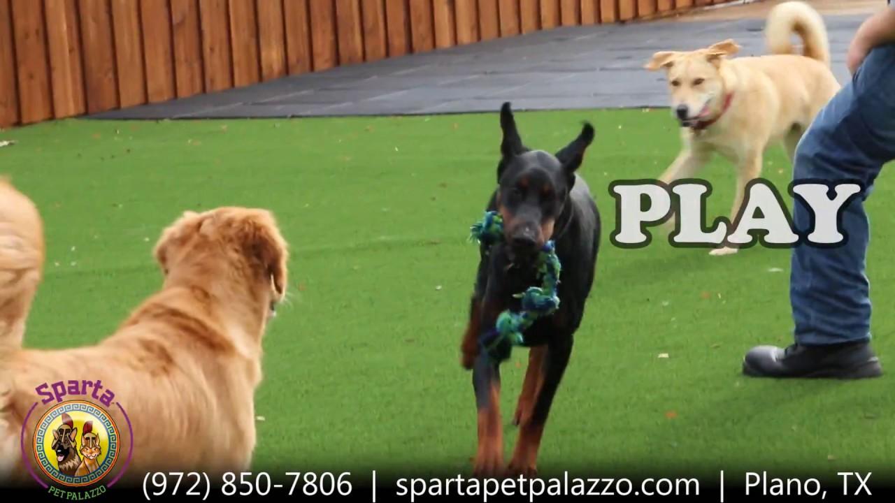 Dog Day Care Studio City