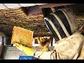 Extreme Honey Bee Hive Removal | SO MUCH HONEY | Honey Bees in the Ceiling!