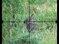 The Airgun Show – Squirrel And Rabbit Scope-cam Hunting, PLUS The Walther LGU Varmint On Test