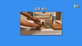 [흐음] 약사 처방 피부병 아토피 각질 예방 강아지 고…
