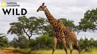 Afrika Hayvan Belgeseli