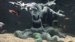 Everything Aquarium new additions