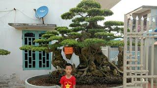 Bất ngờ Vườn  cây ôm đá  Lờn nhất  Hải Hậu Nam Định 0984270574