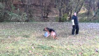 ЗКС, Собака телохранитель.(Дрессировочная площадка