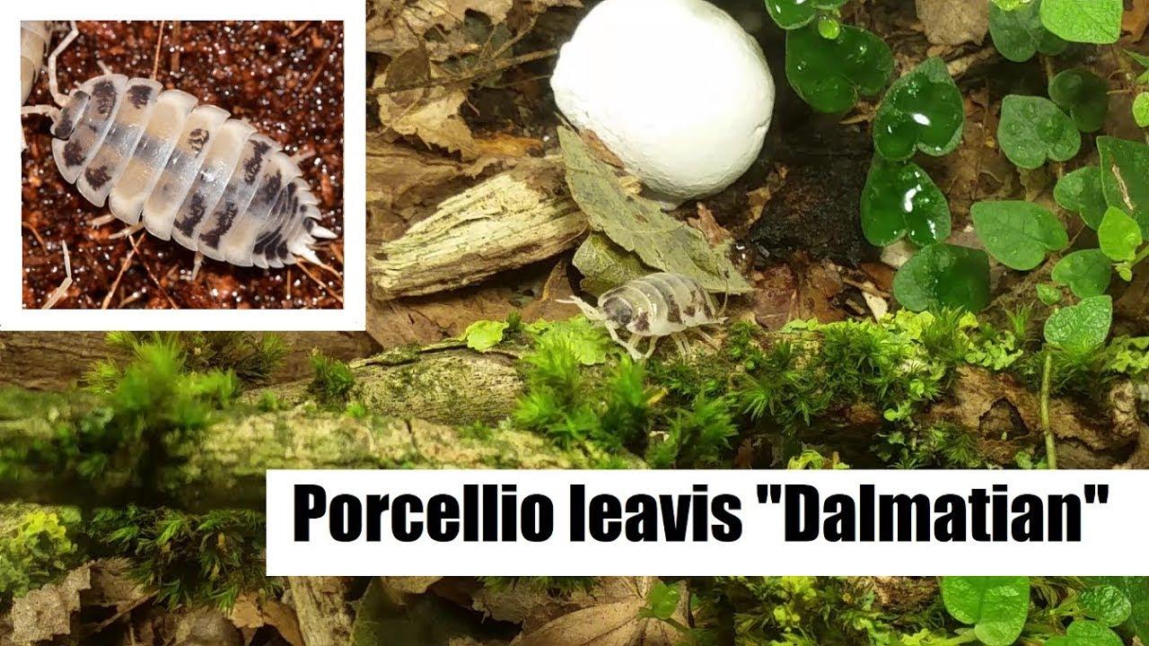Woher Substrat Bekommen Geht Auch Aufzuchterde Welche Terrarium Haltung Diplopoda De Forum