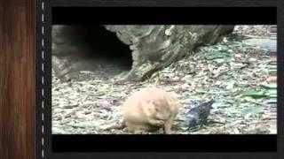 Самые смешные видео приколы с животными птицами кошками собаками 11 Птица отбирает корм у суслика