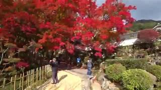 大窪寺の紅葉(2018年11月10日)