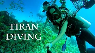 Amazing Diving in Tiran Island / Дайвинг на острове Тиран