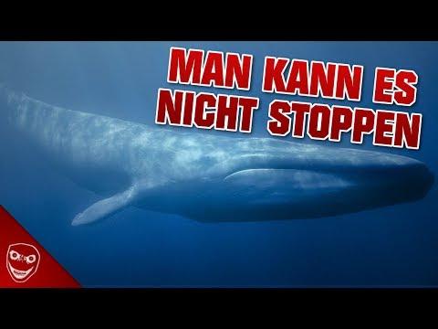 Die Blue Whale Challenge - Wieso man es nicht stoppen kann!