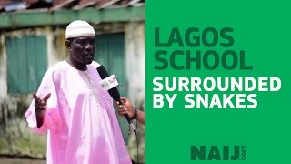 Lagos school surrounded by snakes