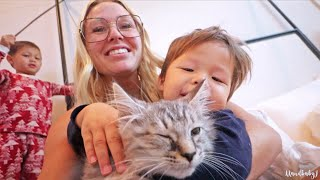 Surprising Our Kids With A Baby Kitten!
