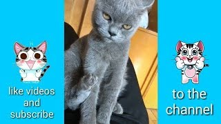 funny animals, funny dogs and cats, funny pets