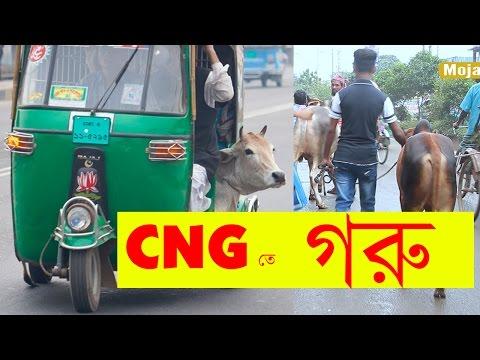 সিএনজি তে গরু নিমু   Bangla Funny Video   Bangla Prank EP 13   Mojar Tv