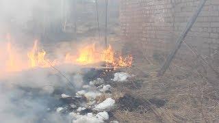 """В Костроме едва не сгорел центр помощи животным """"Белый Бим"""""""