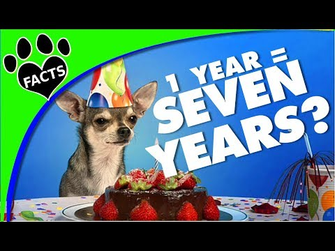 dog-years:-how-do-you-calculate-dog-years-to-human-years---animal-facts