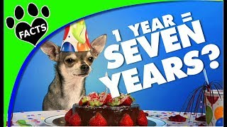 Dog Years: How Do You Calculate Dog Years to Human Years - Animal Facts