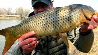 Весенняя рыбалка на карасей и сазана в Астрахани. Небольшой ерик порадовал разнообразием рыбы.