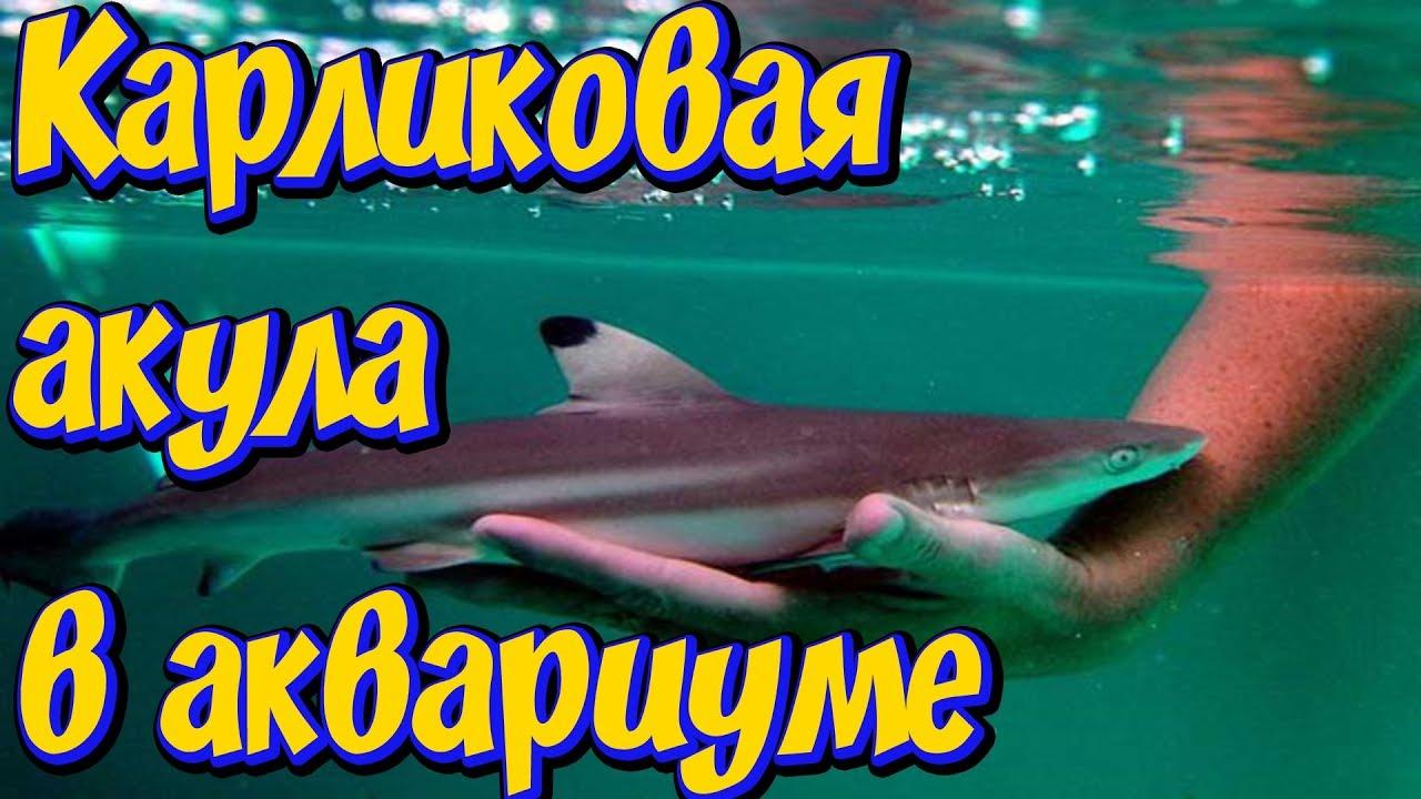Объявления о продаже рыбок, фильтров и насосов раздела аквариум в краснодарском крае на avito. Краснодарский край. Цена не указана.