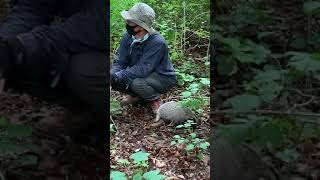 동물농장 오소리 야생훈련