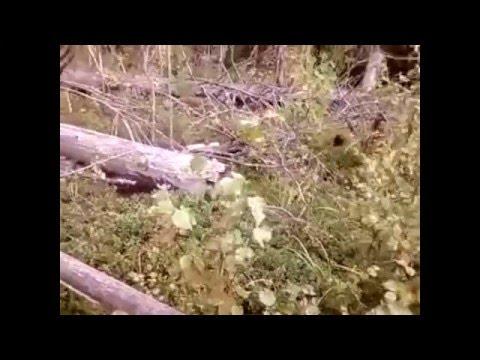 Брусника. Описание и свойства брусники