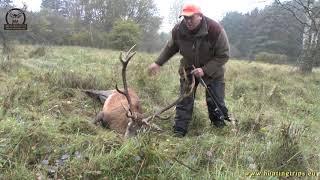 Driven Hunt in Poland : Drivjagt Polen ; Drückjagd Polen: october 2016