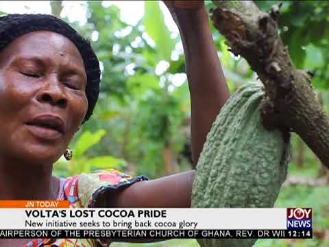 Volta's Lost Cocoa Pride - Joy News Today (1-12-17)