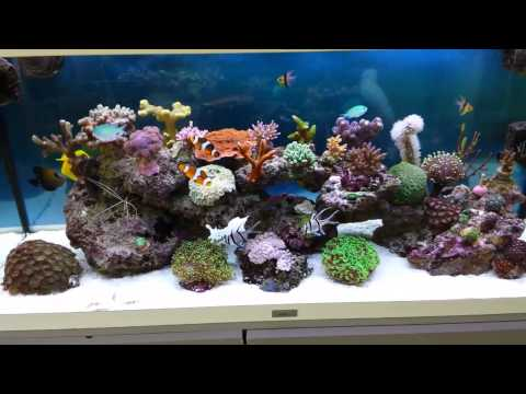 Update juwel rio 180 marine