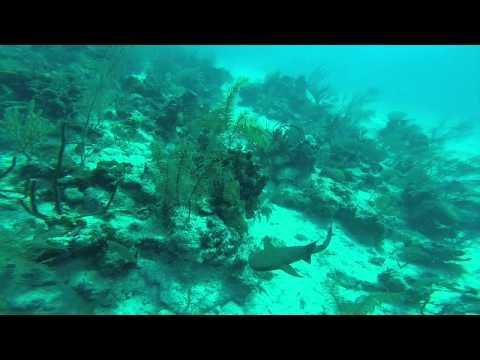 Grand Turk Diving- Shark!