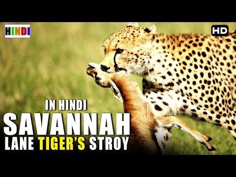 Animal Planet अब देखिये हिंदी में   Wild Life   Savannah Lane Story
