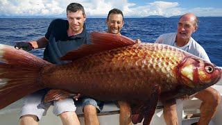 10 Strangest Sea Creatures EVER Caught! - 100% REAL