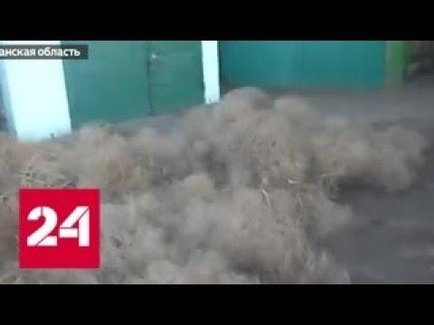 'Тысяча чертей' пробежалась по Астраханской области - Россия 24