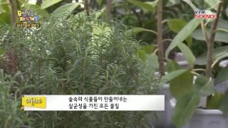 [숨은과학찾기] 실내식물의 재발견 / YTN 사이언스