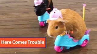 Hamsters Ride Toy Scooters
