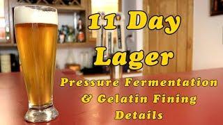 Larry&#39s Quick Lager: Pressure Fermentation &amp Gelatin Fining Details