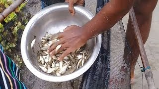 Unique Net fishing trap || Village Boy lot of fresh Country fish catching in natural bill