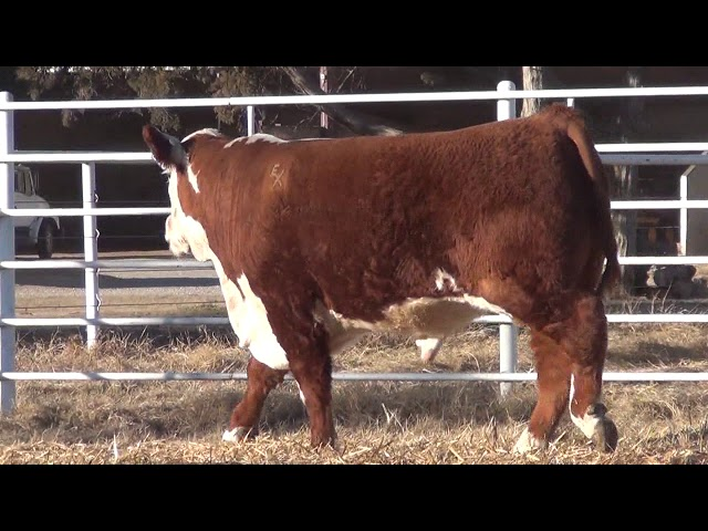 Express Ranches Lot 240