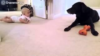 Малыш знакомится с собакой(, 2014-11-11T16:35:21.000Z)