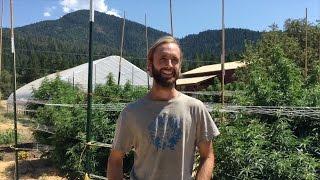 Oregon: The Cannabis Capital of The World