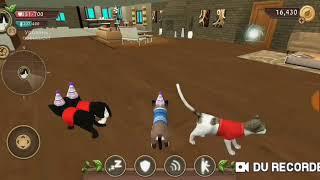 Баги в Cat sim. Новая игра на канале