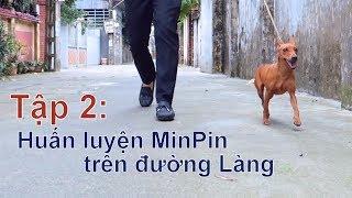 T2: Huấn Luyện chó Miniąture Pinsher ngay trên đường Làng/Chó Minpin đẹp/NhamTuatTV-Dog in Vietnam