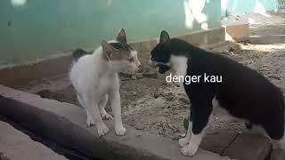 Medan dubbing kucing, lucu abis wkwkwk