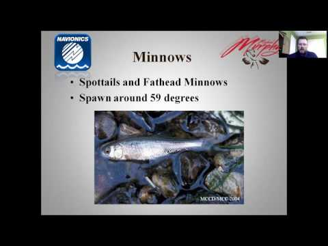 Webinar: Aquatic Food Chain with Michael Murphy