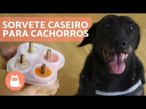 Como Fazer SORVETE CASEIRO Para Cachorros - Passo A Passo!