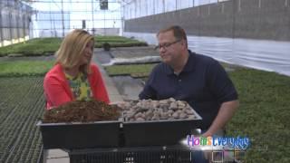 Stone Mulch vs Shredded Bark Mulch