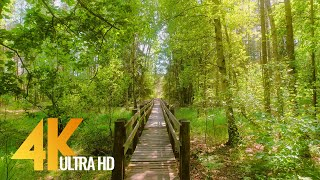 4K Walking Tour through the Amazing Natural Landmarks of Lithuania - Part #2