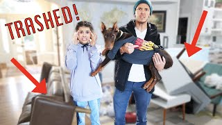 THEY trashed our house!!   what did they do to the dogs?